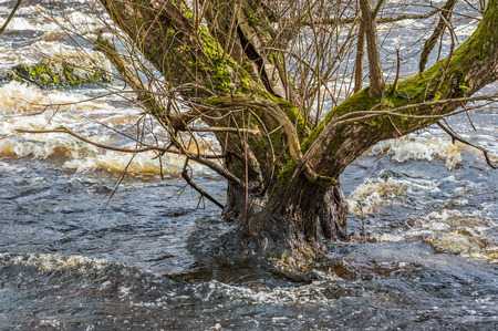 undermine: Spring flood with high water levels erodes the soil and threaten to undermine the tree. Tree is old and has stood here for a long time.