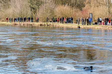 spectators: MORRUM, SWEDEN - MARCH 28, 2015: Premiere day for trout and salmon fishing. Spectators walk along river to see the fishing. No fishing in picture. Mallard in foreground.