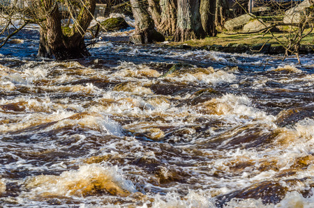 riverside tree: Wild rapids and high water levels flood riverside and erodes soil from tree roots. Stock Photo
