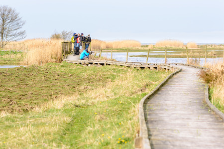 migratory birds: Bejershamn, Sweden - April 25, 2015: Photographer and ornithologists on wooden bridge looking on migratory birds in wetland as they arrive in early spring. Bejershamn is a protected wildlife reserve known for its birdlife.