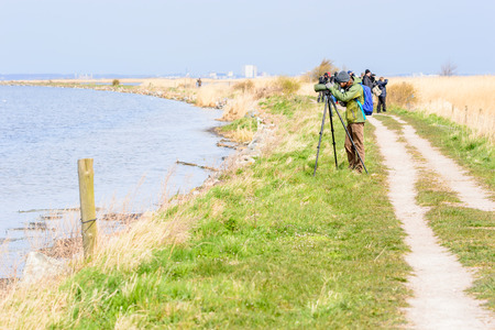 birdwatcher: Bejershamn, Sweden - April 25, 2015: Unknown birdwatcher looking after migratory birds in wetland as they arrive in early spring. Bejershamn is a protected wildlife reserve known for its birdlife.