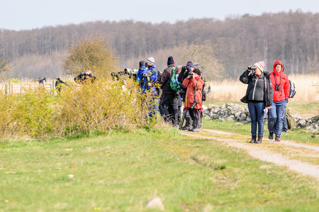 looking after: Bejershamn, Sweden - April 25, 2015: Birdwatchers looking after migratory birds in wetland as they arrive in early spring. Bejershamn is a protected wildlife reserve known for its birdlife.