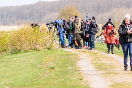 birdwatcher: Bejershamn, Sweden - April 25, 2015: Birdwatchers looking after migratory birds in wetland as they arrive in early spring. Bejershamn is a protected wildlife reserve known for its birdlife.