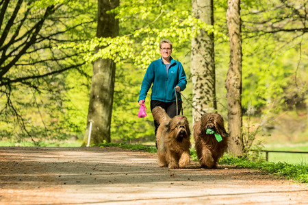 RONNEBY, SWEDEN - May 11, 2015: Unknown woman is out walking her two dogs, holding a pink plastic poo bag in hand. Dog carry green toy. Eye contact with woman.