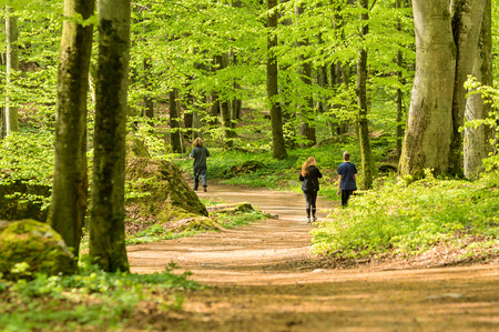 vividly: RONNEBY, SWEDEN - May 11, 2015: Three unknown persons walking and running through vividly green beech forest. Persons seen from behind. Exercise in the forest is very popular and healthy.