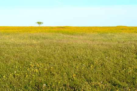 lonesome: Open and still green grassland with herbs and flowers. Small shrub break the horizon. Light blue sky.