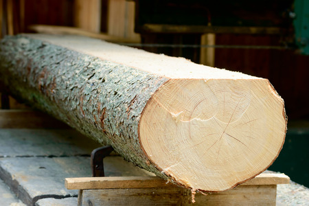 sawed: Thick log of timber being sawed into planks. Timber seen from the end with cut made on top.