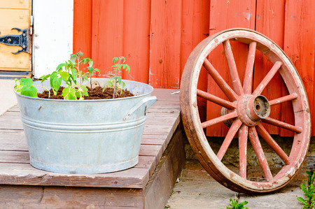 wheel house: Red wagon wheel and zinc metal bucket with tomato plants in front of red wooden house. Retro style use of old vintage parts.