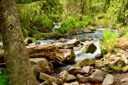 broken through: A small river or creek with small rapids flowing through the undergrowth of a forest. A dead tree trunk is broken and lies across the river in the foreground. Ferns and spruce are visible plants. Stock Photo