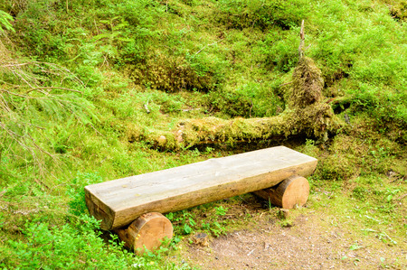 no person: Wooden bench made of timber logs. Bench is located in lush green forest undergrowth in old forest. Moss and vegetation grow on fallen tree in background. No person visible. Stock Photo