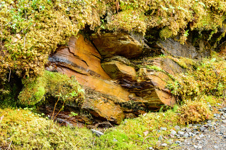 rock layers: Layered rock with different mosses and vegetation on side. Very damp environment that suits the mosses well. Rock layers slightly tilted and has the color of rust that indicates iron rich surroundings Stock Photo