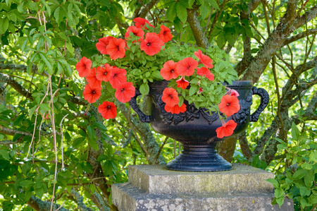 shrubbery: Fine black iron flower pot with some red flowers inside. Pot is standing on stone pillar and has some green shrubbery behind it. Flower is called Petunia. Stock Photo