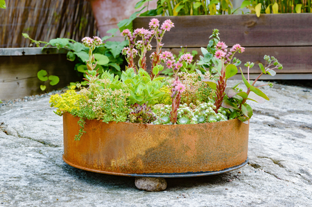 recycle area: Recycle or up cycle in the garden. Here is a cut of metal barrel with different flowers in it. Barrel bottom is rusty and old but serves fine as plant container.