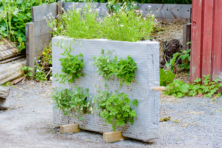 recycle area: Recycle or up cycle in the garden. Here is a standing block of netted material with plants on sides and top. Plants seem to thrive excellent in the substrate. Stock Photo