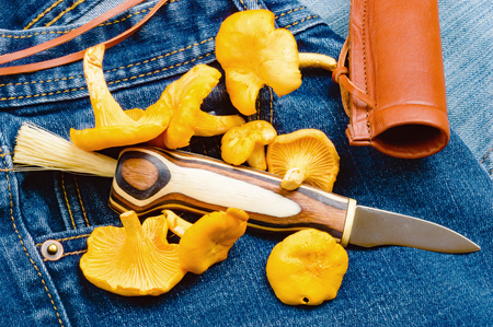 scabbard: Newly picked chanterelles and a mushroom knife on a pair of denim jeans.
