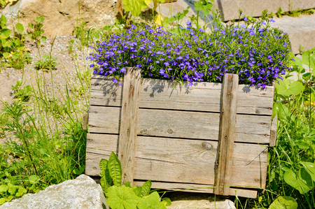 recourse: A wooden crate with small blue flowers inside. Stones and vegetation surround the crate. Crate is unpainted and the sun is shining.