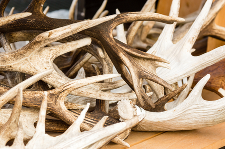 discard: A pile of red deer antlers on a table. Antlers are close up and show different shades of brown.