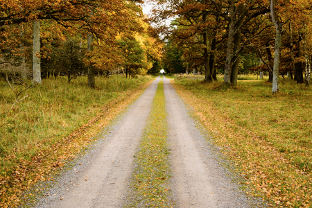 dirt road recreation: A straight narrow dirt road in surrounding oak forest. The autumn leaves are colorful and three unknown persons are walking the road some distance away. The canopy form a small tunnel up ahead. Stock Photo