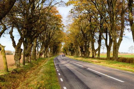 driving a car: A car is driving away from you on a fine stretch of farmland tree avenue or alley in the autumn. The trees have some yellowing leaves left on them but some are already dropped to the ground.