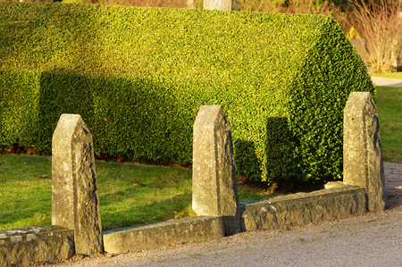 Common evergreen box (Buxus sempervirens) also known as European box, or boxwood. Here seen with granite stone pillars at the corner of a gravel path and a grass lawn.