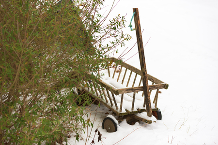 shrubbery: A small and weathered wooden wagon or trolley with light snow cover beside some shrubbery. Trolley is unpainted. Stock Photo