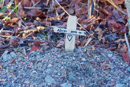 Karlskrona, Zweden - 13 januari 2016: Een klein huisdier graf met een kruis. Huisdieren heette Alvin. Hart is geschilderd langs elkaar heen. Grind bedekken het dier.