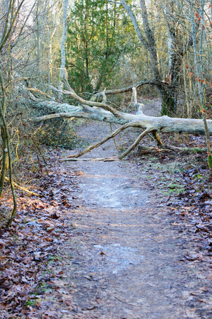 hindrance: A tree has fallen over the hiking trail and is a hindrance.