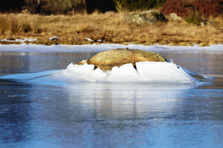 A granite boulder pushes through the ice surface as the ice level lowers. This forms a fine ice hill around the stone. A natural ice formation with beauty. Natural forces at play. Standard-Bild