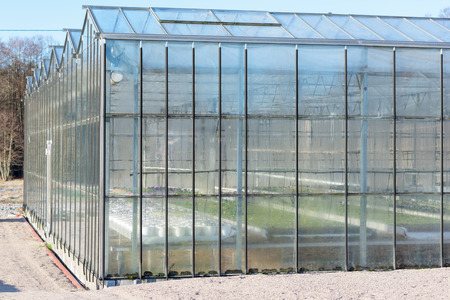 invernadero: Part of a greenhouse facade with plants visible inside. Condensed water is running down on the inside of the large windows. Foto de archivo