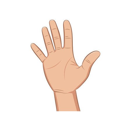 hi five: The brush of a realistic hand lifted up on a white background. Vector illustration.