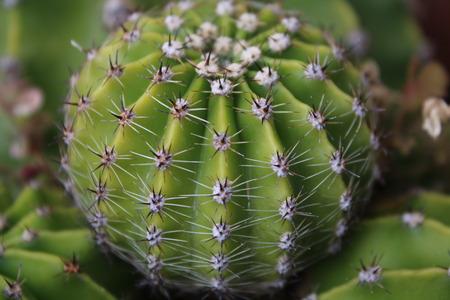 stretta di una pianta succulenta