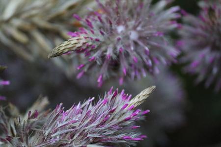macro photo of a purple flower Stock Photo