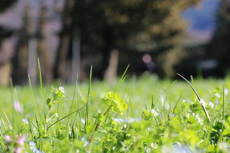 closeup of grass blades and flowers of a meadow Фото со стока