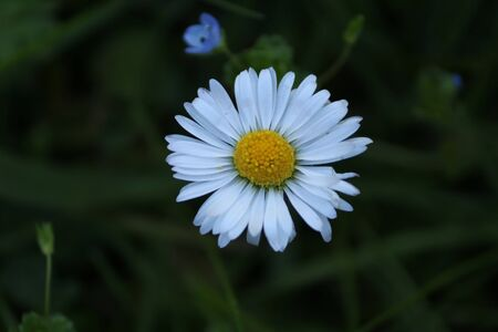 closeup of a daisy in a meadow