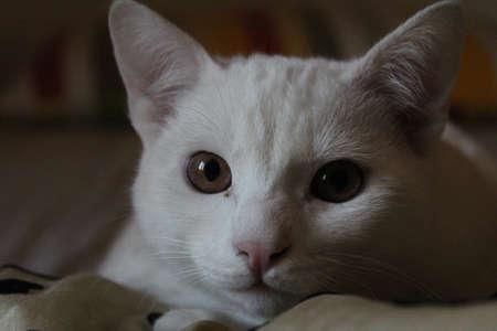 ALBINO CAT CLOSE UP
