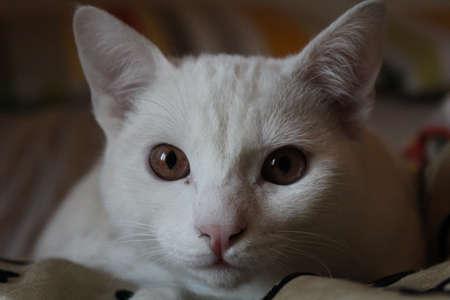 Snout of albino cat