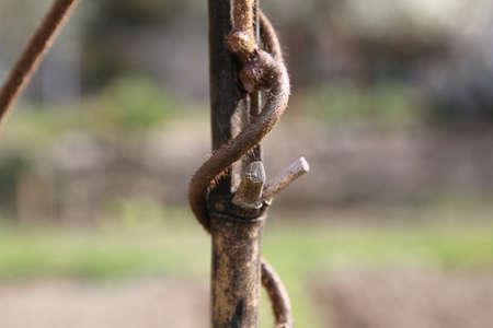 bambo and pruned branch of a kiwi plant Фото со стока