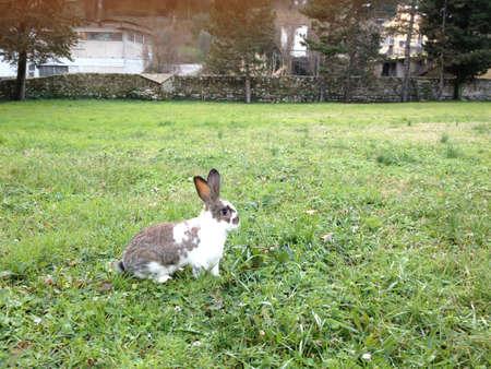 rabbit in a green meadow
