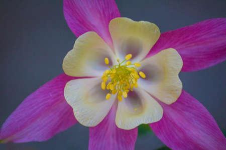 macro photo of a flower