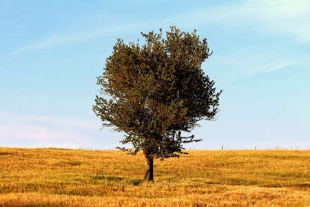 tree in the middle of a field of wheat