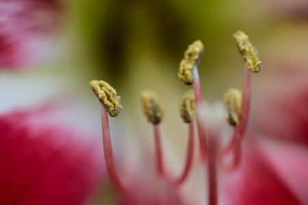 macro photograph of the pistils of a flower