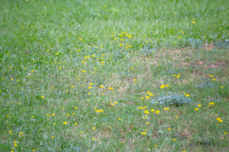 meadow with yellow flowers Фото со стока