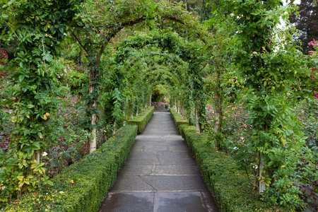 hedges: Garden pathway with foliage arbor