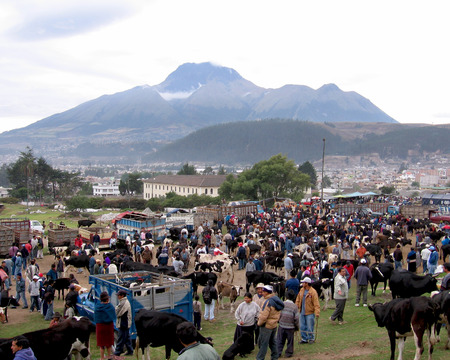locals: OTAVALO, ECUADOR: 8 OCTOBER 2005. A view of the famous Saturday cattle market in the andean town of Otavalo. This huge weekly event is very popular with tourists and locals alike.