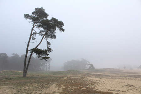 A lone tree on a very misty day at Wekeromse sand near Ede in Gelderland, in the Netherlands. It is an area of drifting sand found in Northern Europe.