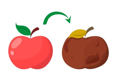 Bad rotten apple. Red fresh fruit become bad vector isolated. Organic rotten vegetarian food. Vektorové ilustrace