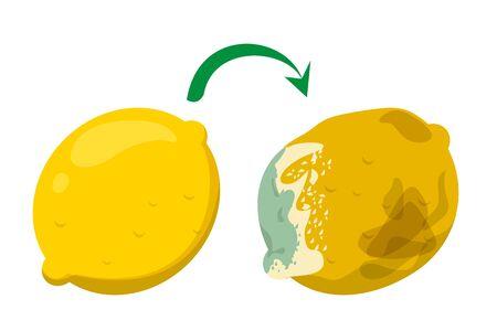 Il limone giallo della frutta diventa marcio e cattivo. Alimenti biologici di agrumi, immondizia. Marciume dolce del limone sano. Vettoriali