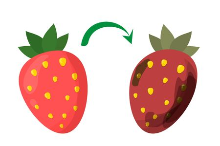Rotten red strawberry vector isolated. Food wast. Dirty, bad and unhealthy berry. Food trash.