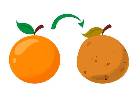 Bad rotten orange. Food waste vector isolated. Citrus fruit rot, vegetarian meal becoms bad. Good fresh meal become bad. Ilustração