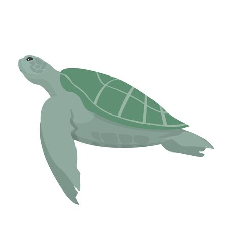Turtle animal vector isolated. Underwater creature, marine wildlife. Ocean fauna, aquatic world. Çizim
